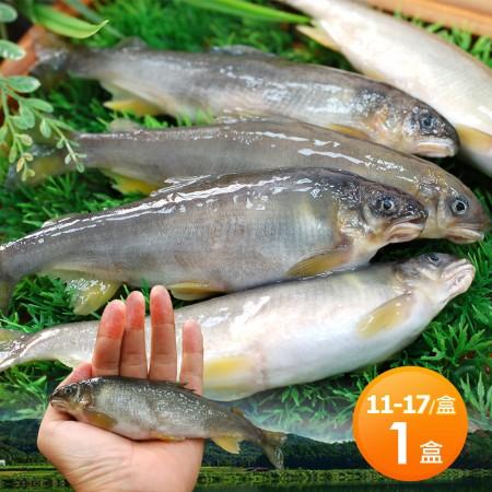 【築地一番鮮】宜蘭帶卵小香魚1盒(11-17尾裝/920g/盒)免運組