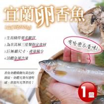 【築地一番鮮】宜蘭特選巨無霸XXL爆卵母香魚1盒(5尾/920G/盒)免運